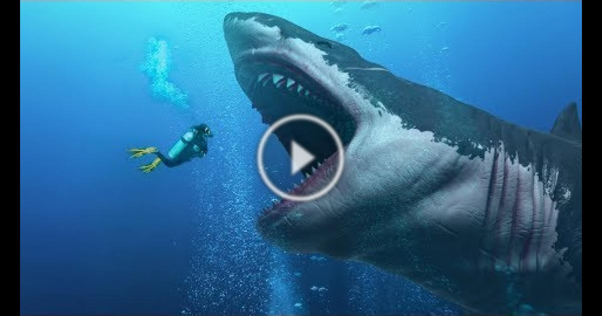 Did They Find An Alive Megalodon In The Mariana Trench